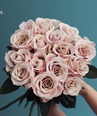 Розы Menta