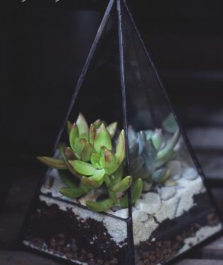 Флорариум #10